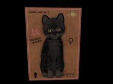 KittyCatS Box -♀ New Born Kitten   Fur: Ocicat - Black