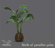{vespertine}- birds of paradise palm