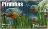 :: 2Xtreme :: Piranhas box trans