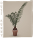 dust bunny . potted sago palm