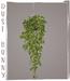 dust bunny . hanging plants . ivy planter