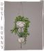 dust bunny . hanging plants . double planter