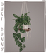 dust bunny . hanging plants . cheese plant