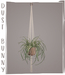 dust bunny . hanging plants . spider planter
