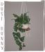 Hanging2