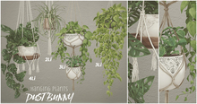 dust bunny . hanging plants fatpack