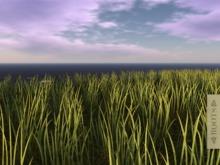 l ROOTS l  Fresh Grass