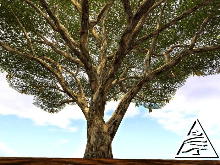 Monkeypod Tree 12LI C/M