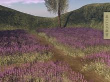 l ROOTS l  Lavender Field