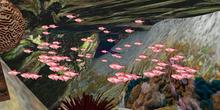 Pink Fish Emitter