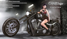 MotoDesign - Black Lion - EVO