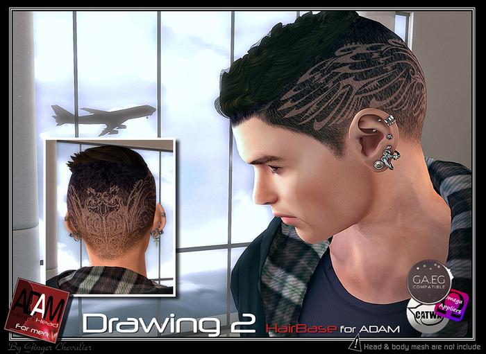 Adam-Hairbase drawing 2