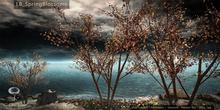 LB SpringBlossoms Tree Animated 4 Seasons