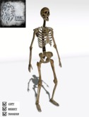 Skeleton Avi Mesh 4