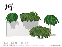 Soy. Voluminous Potted Ferns [addme]