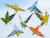 Parakeet's (budgie's) set