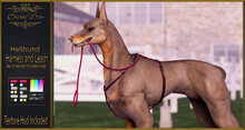 Cheval D'or - Hellhund - Harness and Leash.