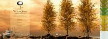 Lombardy Poplar Tree Animated 5 Seasons