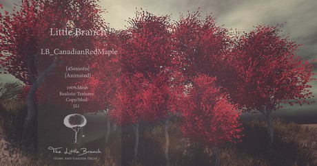 Canadian Red Maple 4 Seasons Animated