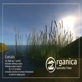 [ Organica ] Cattails 1