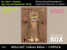KittyCatS! Box .: Ocicat - Chocolate / Key Lime [F]7T:. New Born Kitten - Nicole