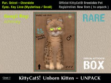 KittyCatS! Box .: Ocicat - Chocolate / Key Lime [M]7T:. New Born Kitten - Johnney