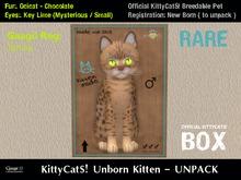 KittyCatS! Box .: Ocicat - Chocolate / Key Lime [M]7T:. New Born Kitten - Jimbo