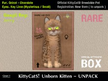 KittyCatS! Box .: Ocicat - Chocolate / Key Lime [F]7T:. New Born Kitten - Jenny