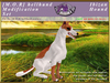 *E* Hellhund Modification Set [BOXED] Ibizan Hound