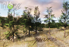 LIMITED TIME PROMO: inVerse® MESH - Conifers woods:  Mixed Spuces