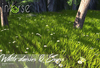 inVerse® MESH - White daisies & grass meadow