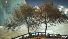 Persimmon Tree Animated 4 Seasons