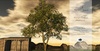 Mango Tree V2 Animated Seasons