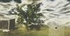 Avocado Tree Animated 4 Seasons