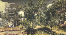 Pear Tree Animated 4 Seasons