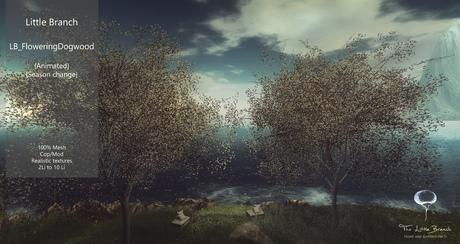 Flowering Dogwood Tree Animated with Seasons