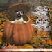 JIAN Pumpkin Pupper