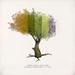[ keke ] small leaf tree . all seasons . soft and hard
