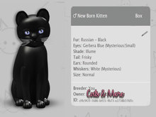 KittyCatS Box - New Born Kitten - ♂ Russian Black 9T