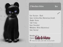KittyCatS Box - New Born Kitten - Russian Black 9T