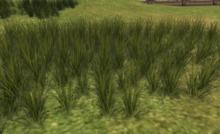 STN Grass