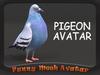 PIGEON AVATAR