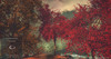 Big Red Maple Tree Animated 4 Seasons
