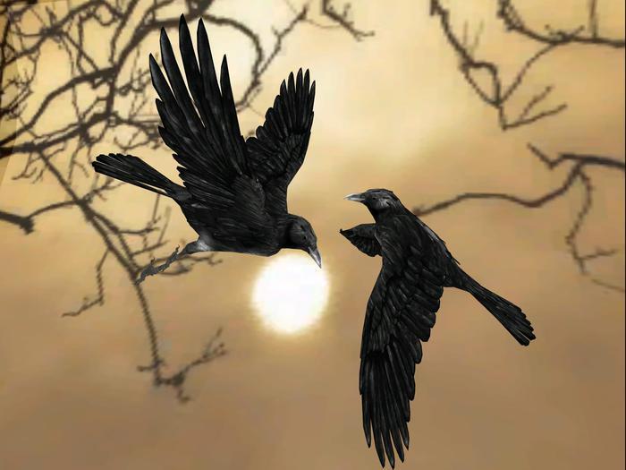 Crow (animated)
