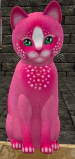 KittyCats - Confetti - PinkBerry- mr.Meko GOR(+120)