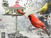Tlc feeder 'fly thru'