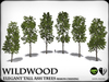 Wildwood - Elegant Tall Ash trees