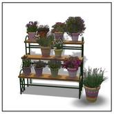 Plant Stacking - Belle Belle Furniture