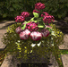 CJ Secret Garden Hydrangea Planter 01