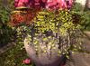 Cj secret garden hydrangea planter 02 02